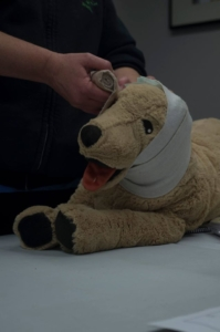 Pet first aid with bandage around the pet's head.
